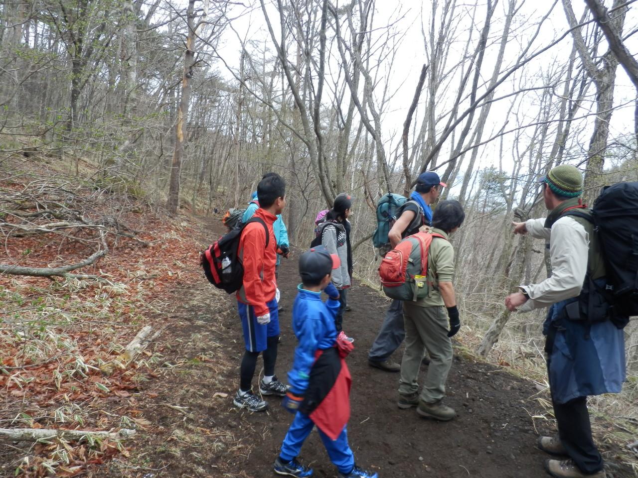 林帯登山道でカラマツの芽吹きについての説明①