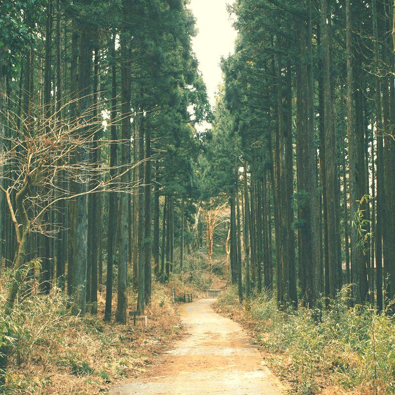 4 einfache Schritte, mit denen du deine Angst kontrollierst und gelassener wirst