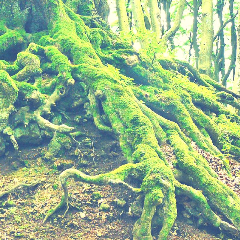 Stress - so überstehst du den Sturm wie ein starker Baum
