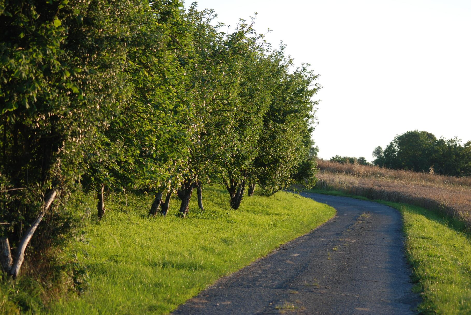 Les pommiers sur le chemin du gîte