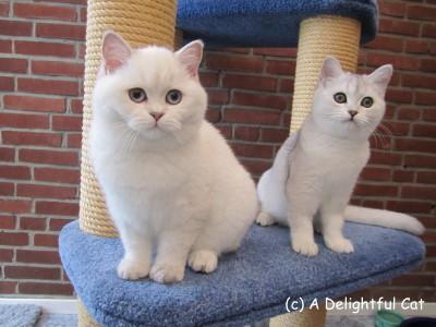Felicia Faye und Gini