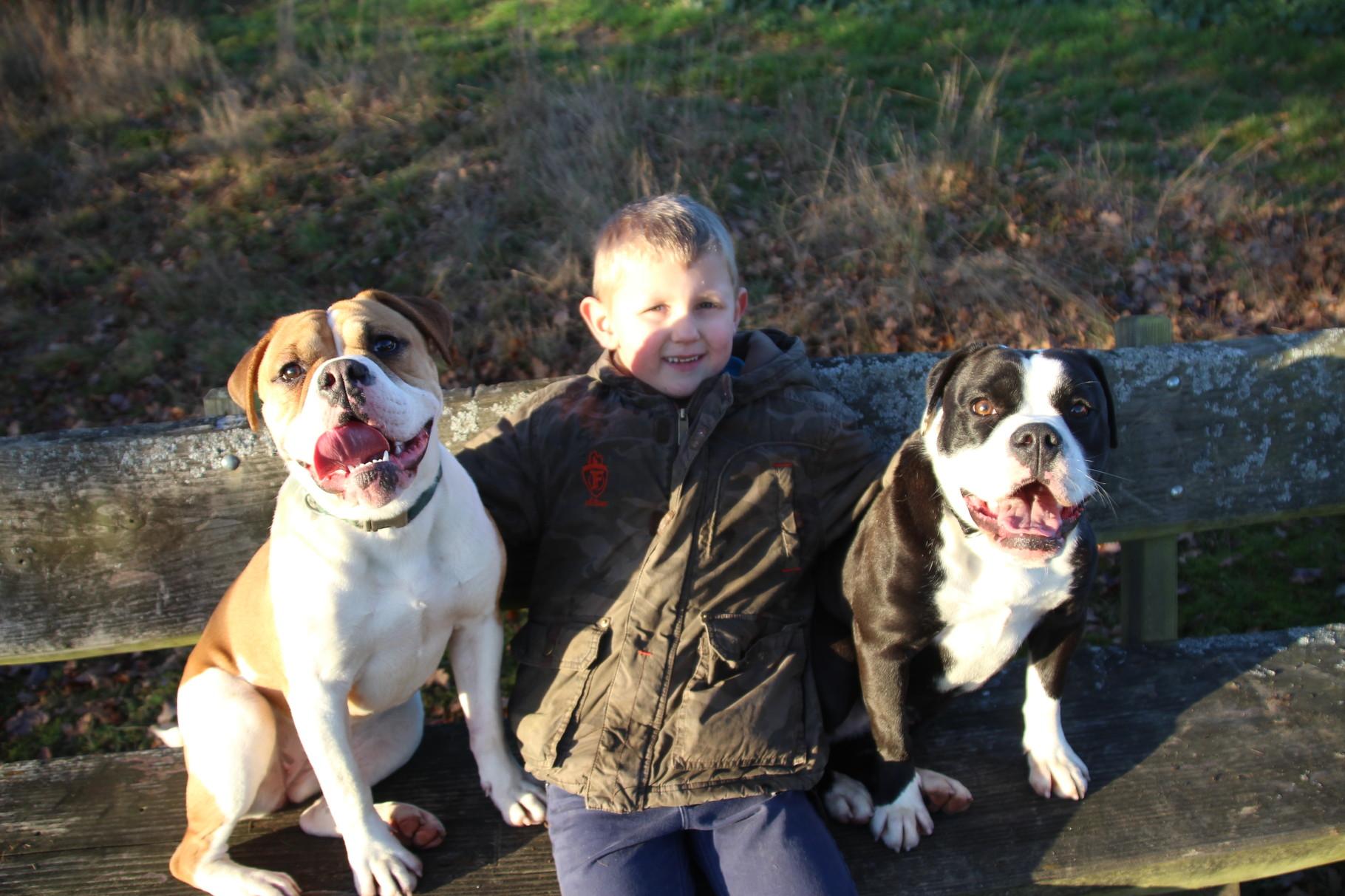 Continental Bulldog Conties Bijoux Indiana und Pickwick RosaLee