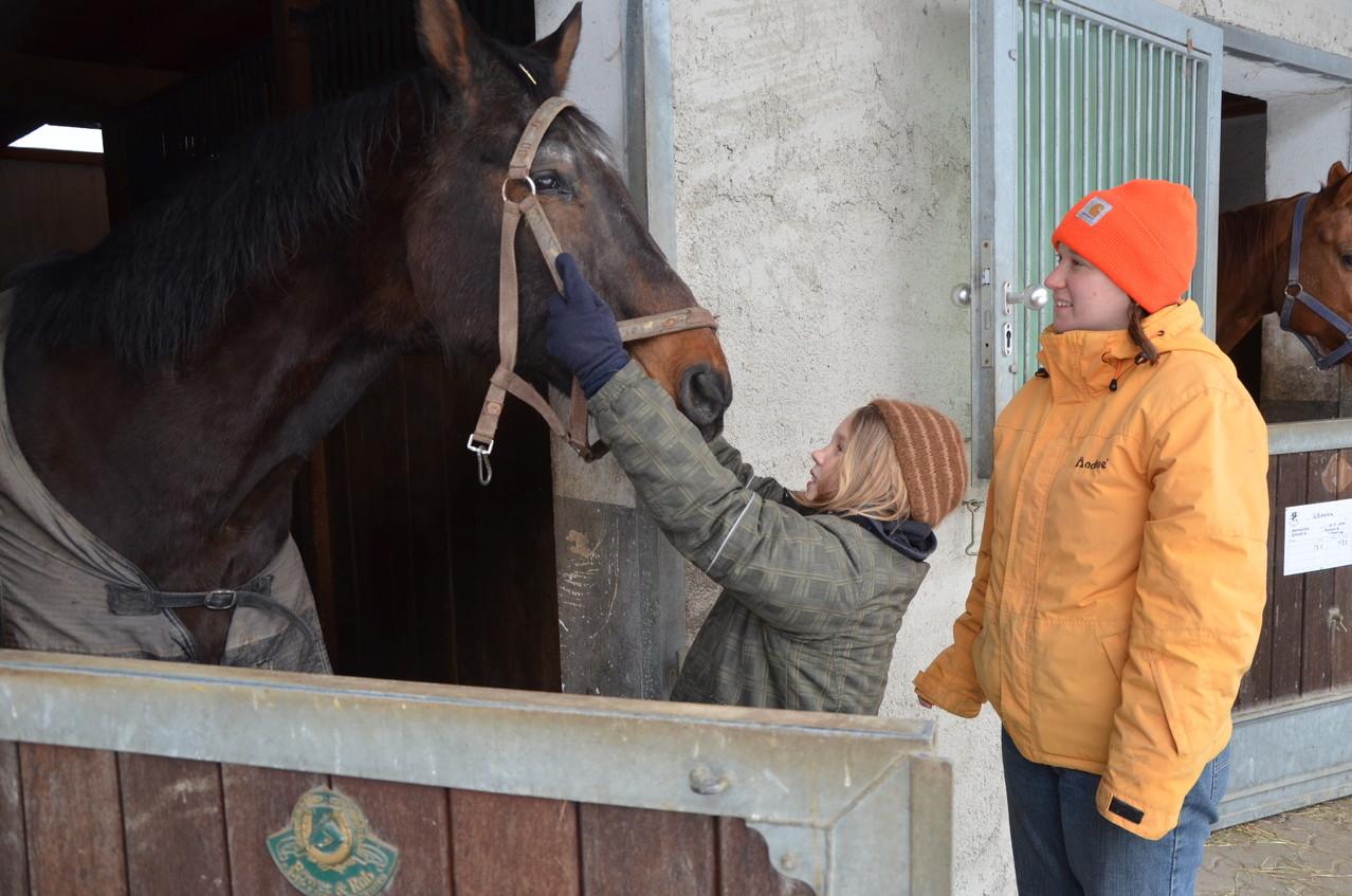so ein großes Pferd!