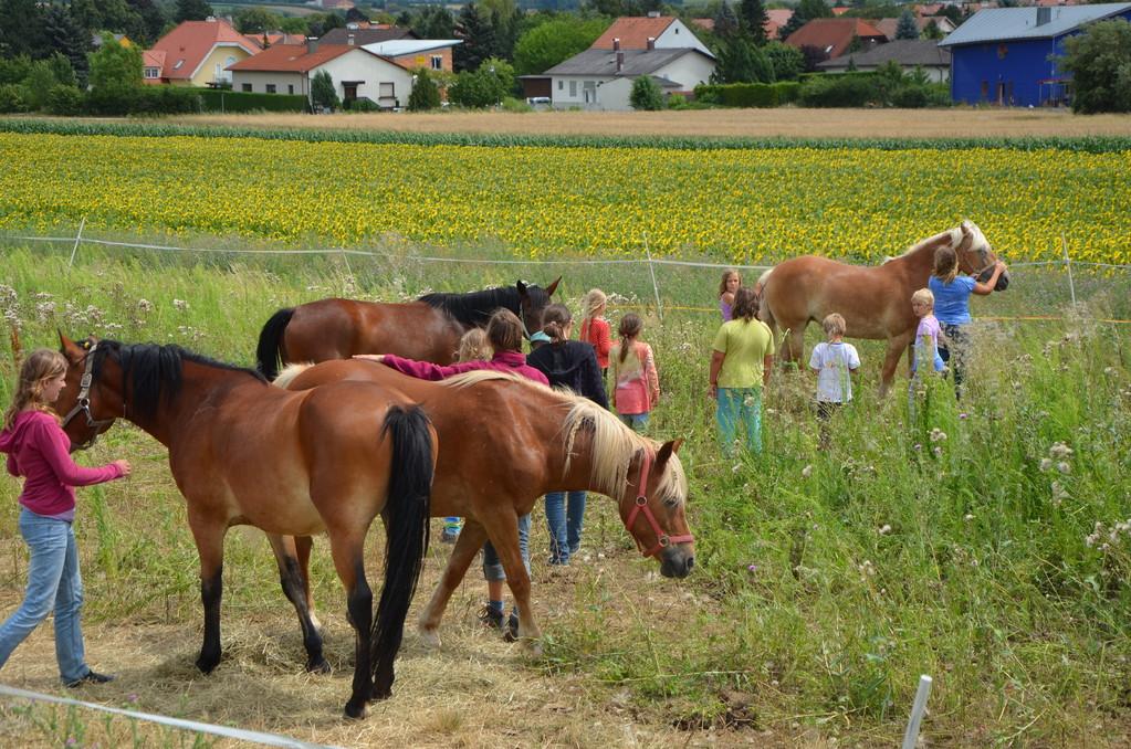 miteinander vertraut - Pferde und Kinder