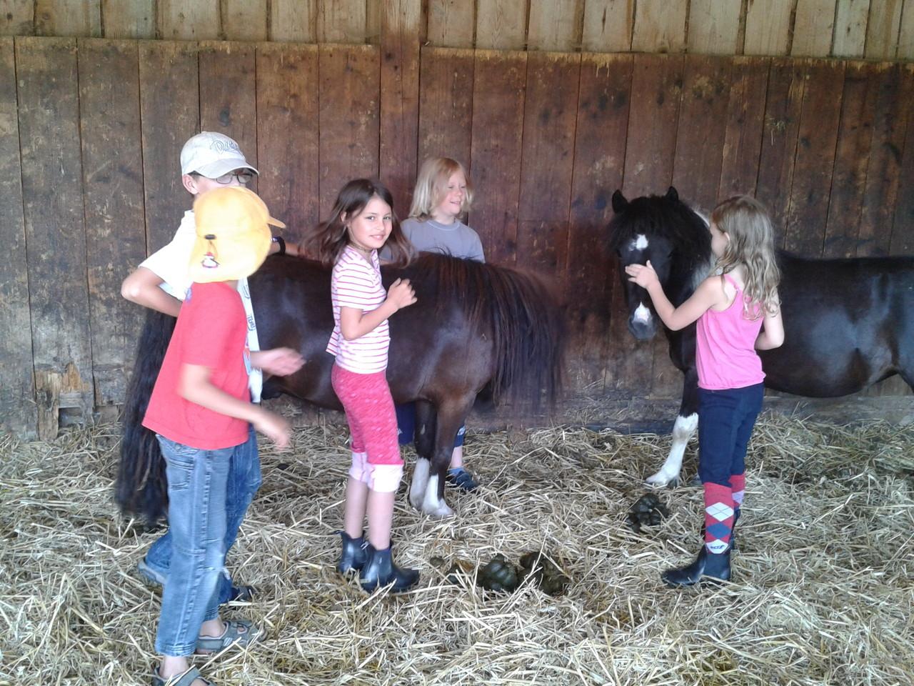 Kennen lernen der Pferde