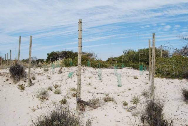 Asentamiento de las dunas en el Parque Regional de las Salinas de San Pedro del Pinatar
