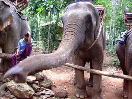 feed the elephant !