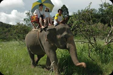 elephant trexing