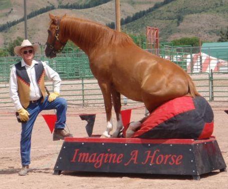 Horse Tuff Bean Bans