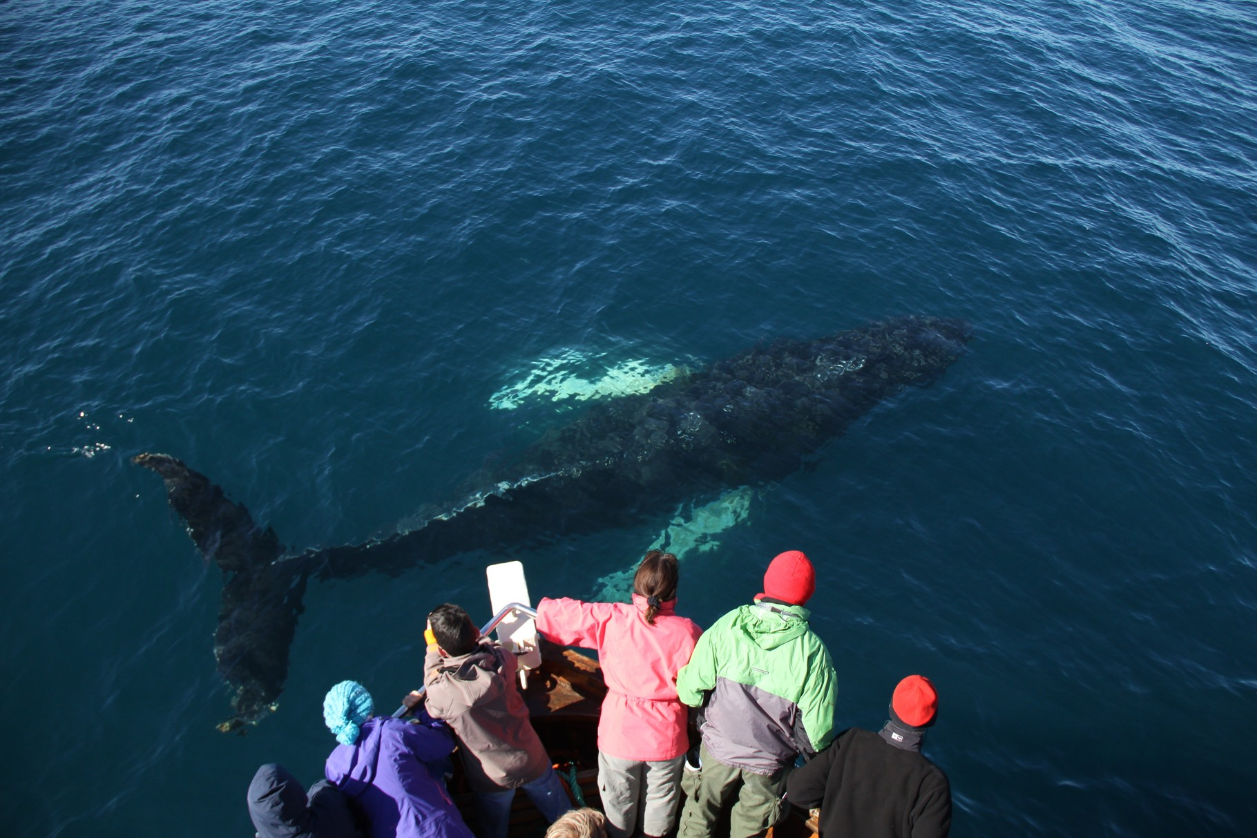 Whale-Watching in Husavik