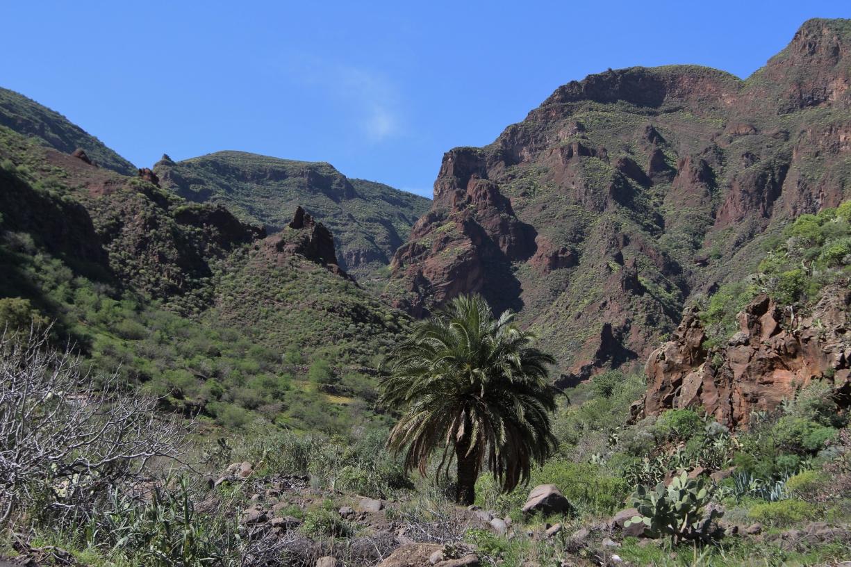 Im Tal von Guayadeque