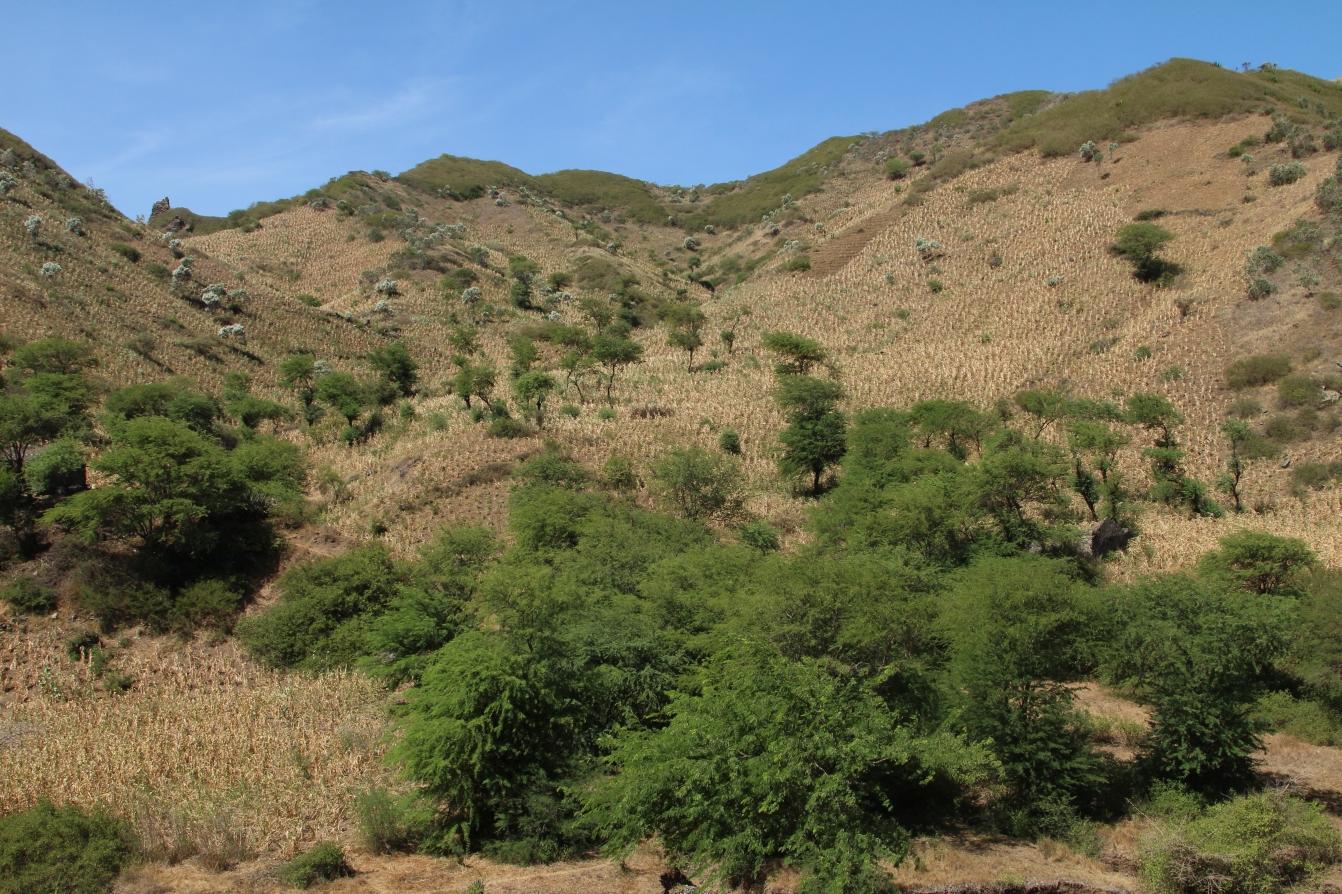 Santiago - Landschaft bei Assomada