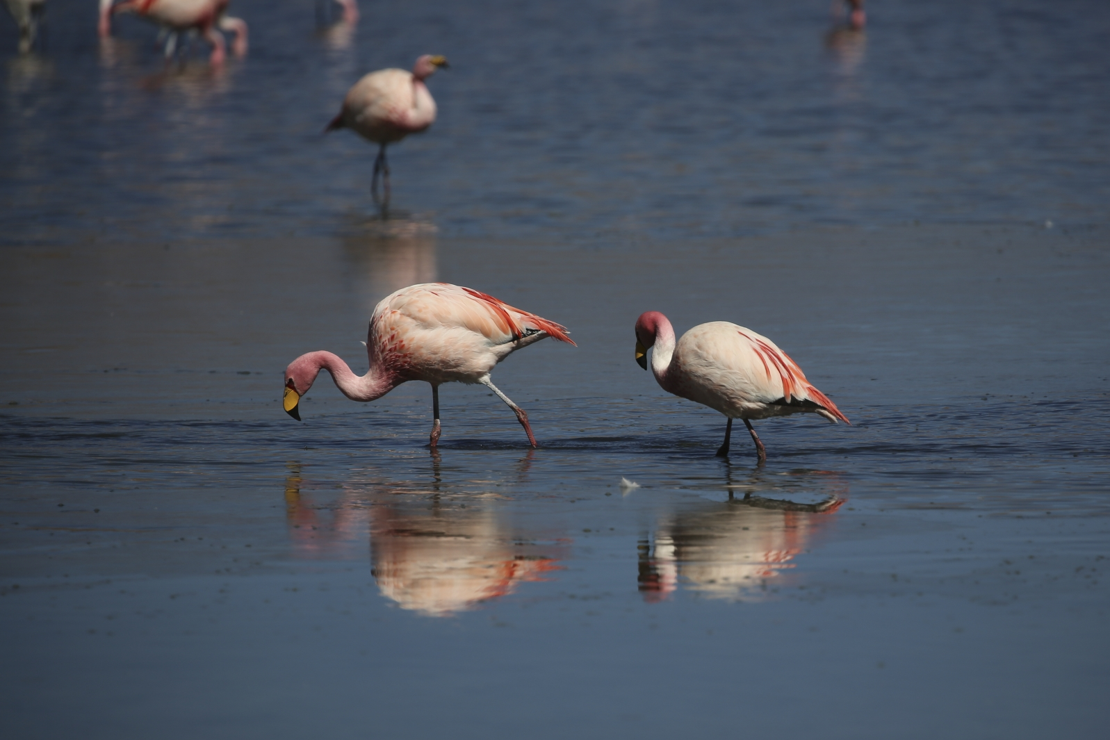 Nationalpark Evora - Flamingos an der Laguna Hedionda