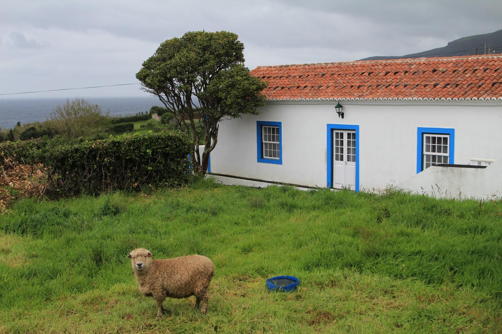 Flores - Ortschaft Ponta Delgada