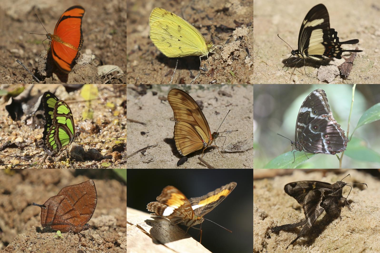 Schmetterlinge am Weg zu den Wasserfällen von Los Espejillos