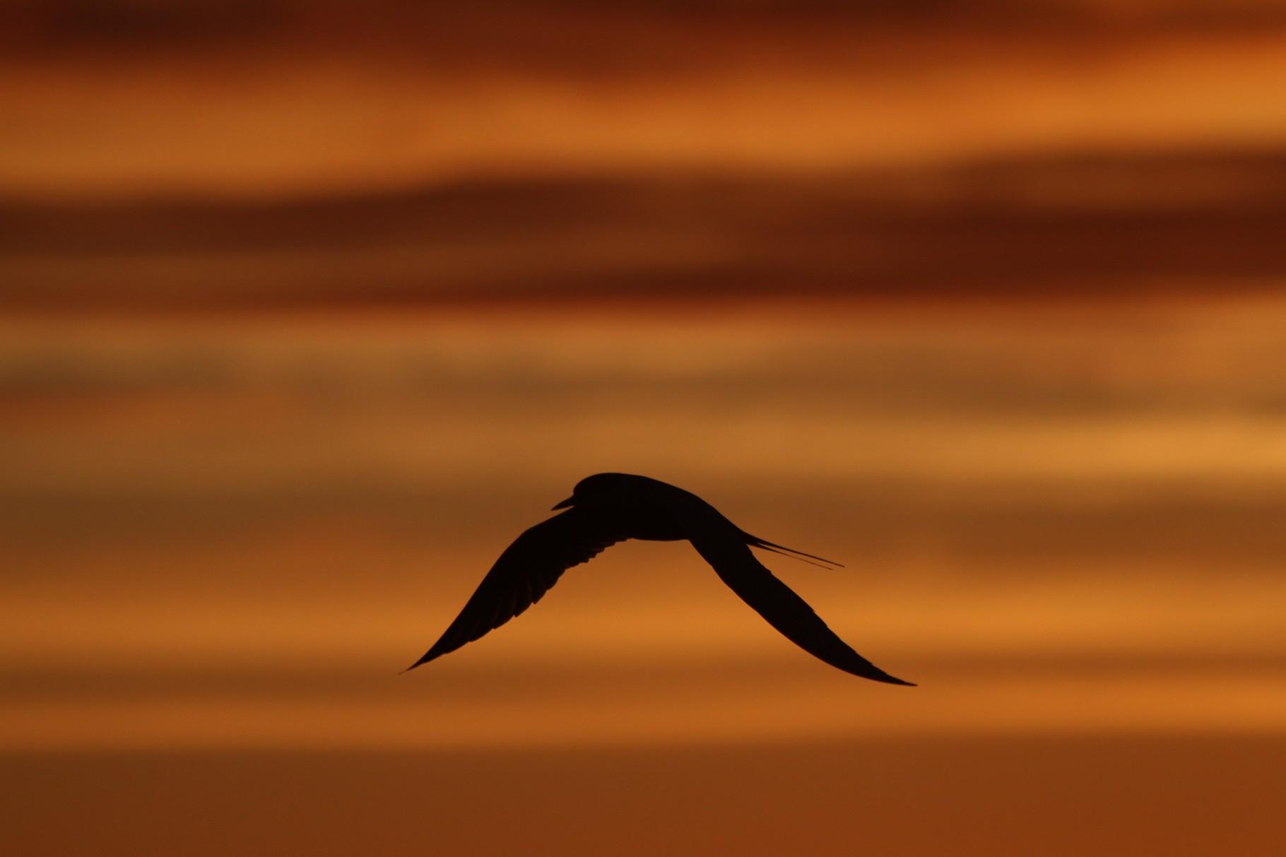 Sonnen untergang - Husavik