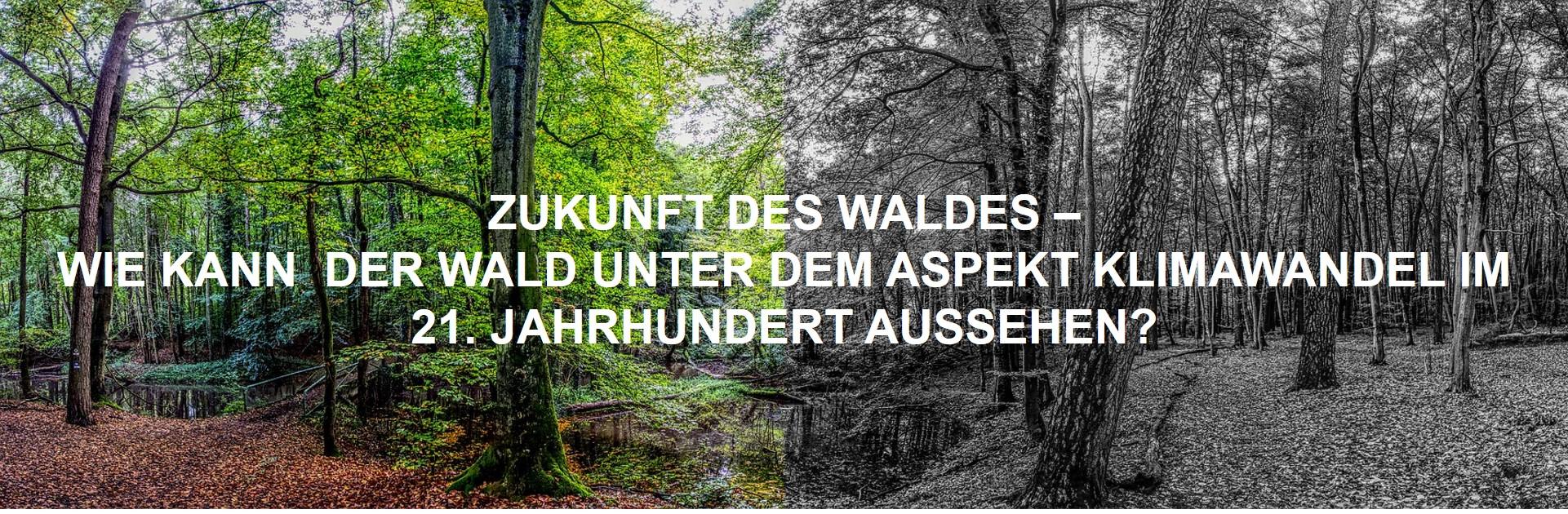"""""""Zukunft des Waldes - Wie kann der Wald unter dem Aspekt Klimawandel im 21. Jahrhundert aussehen?"""""""