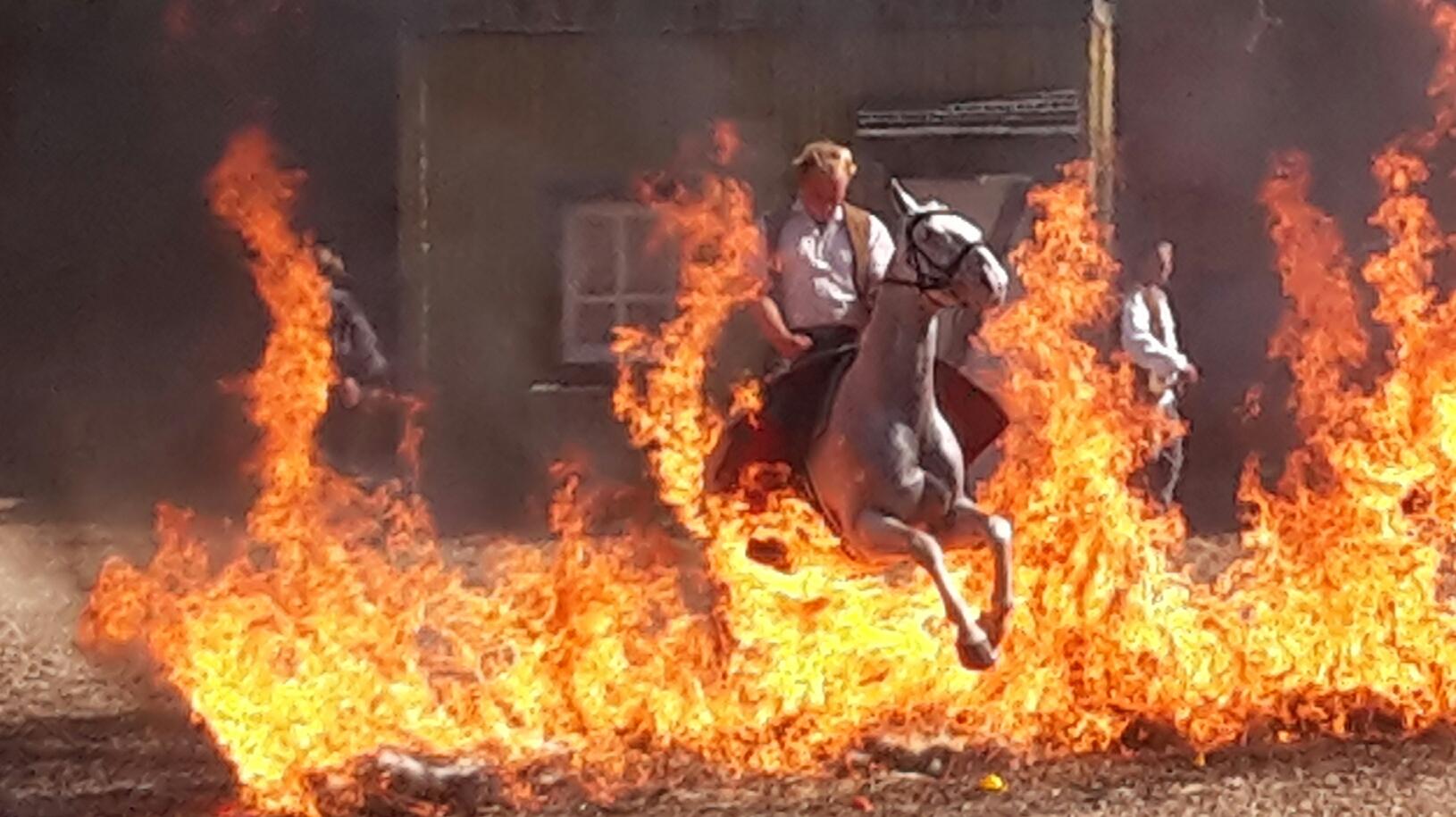 Reiterstuntshow - Pferde ohne Angst vor der Feuerwand