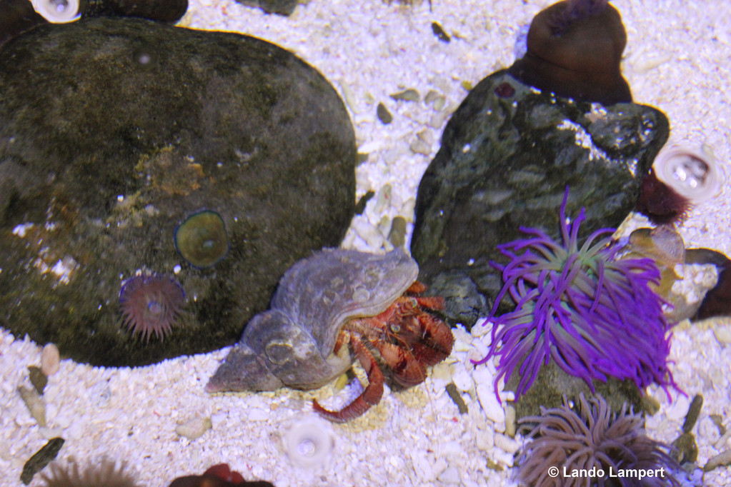 Aus der Artenvielfalt des SeaLife München
