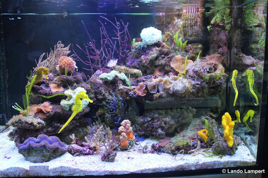 Ein paar Raritäten im AquariumCenter Wildenauer