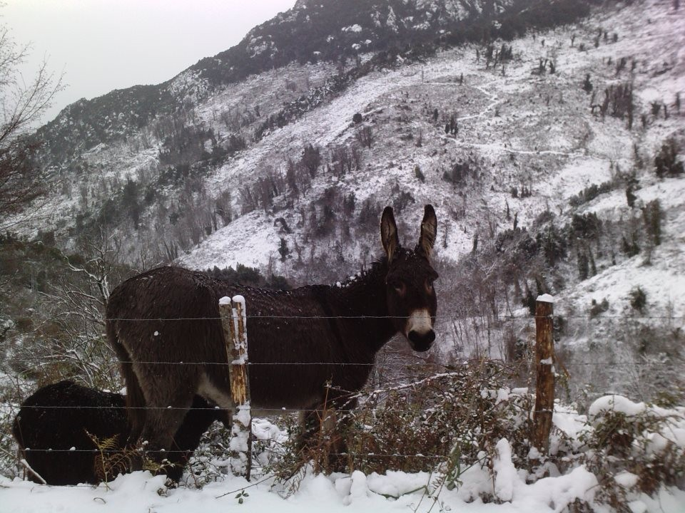 Les ânes, eux…