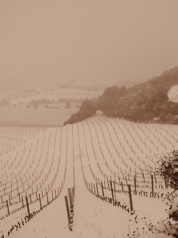 Toujours les vignes de Patrimonio (Annick Olmeta)