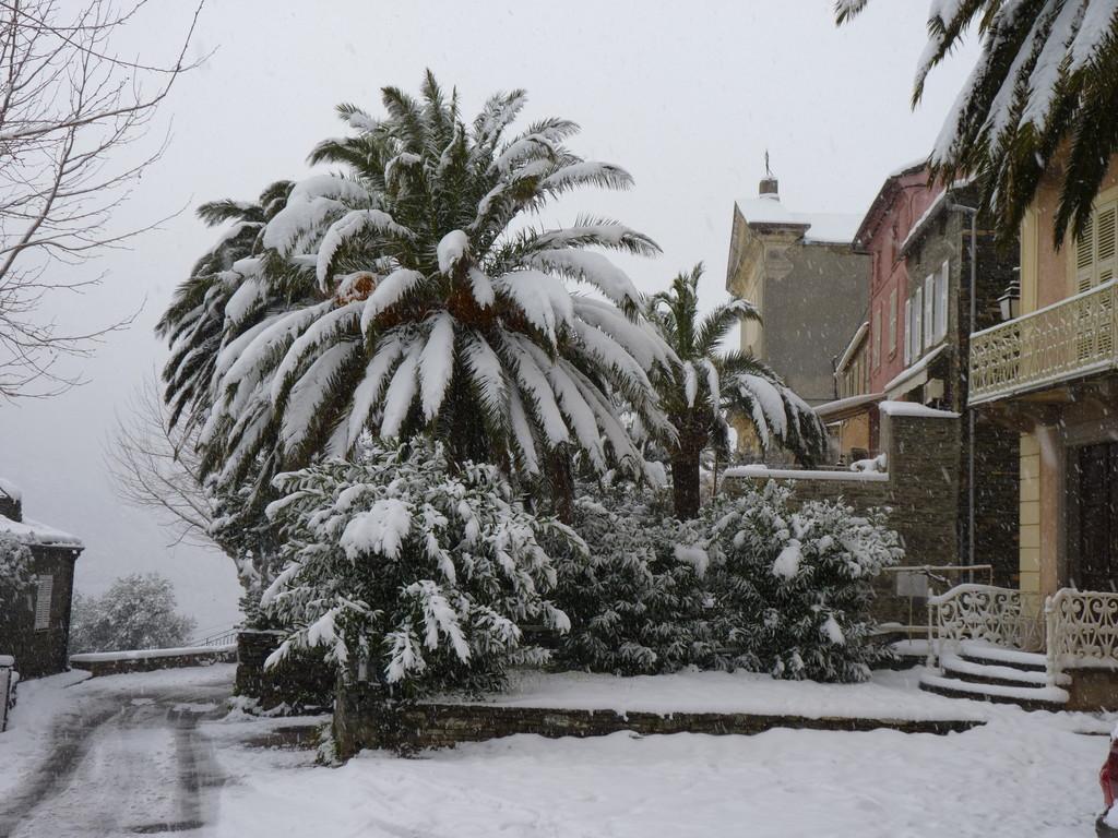 Un palmier enneigé