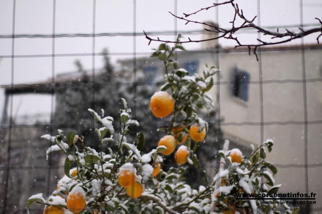 Oranges...givrées d'Aregno