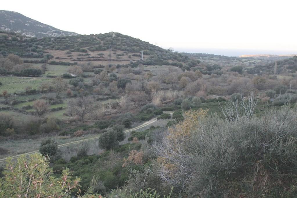 La plaine d'Aregno comme on ne l'avait jamais vue en cette saison