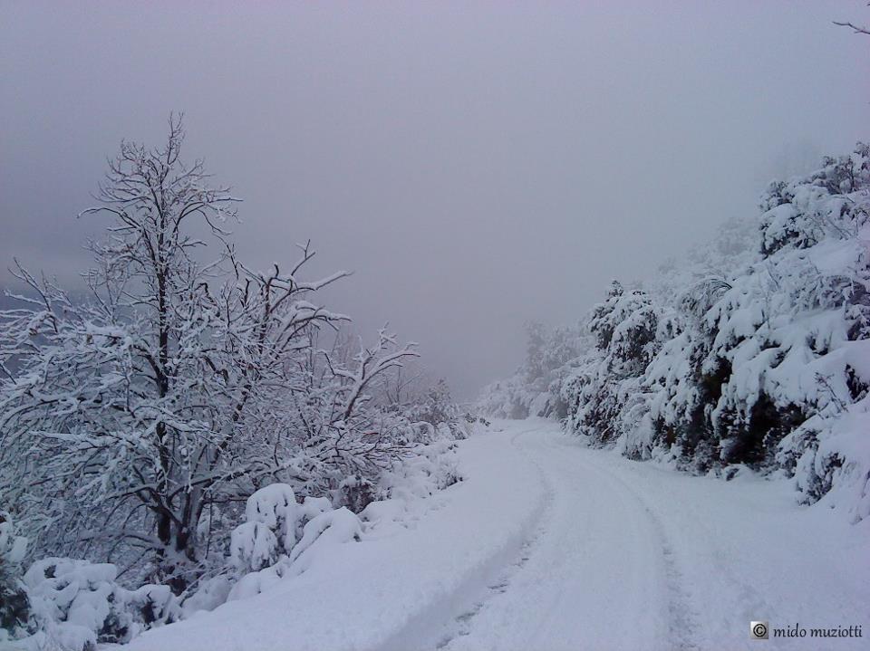 Sur la route d'Erbaghjolu (Mido Muzziotti)