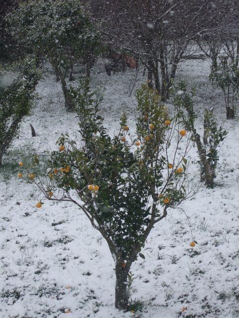 La neige…