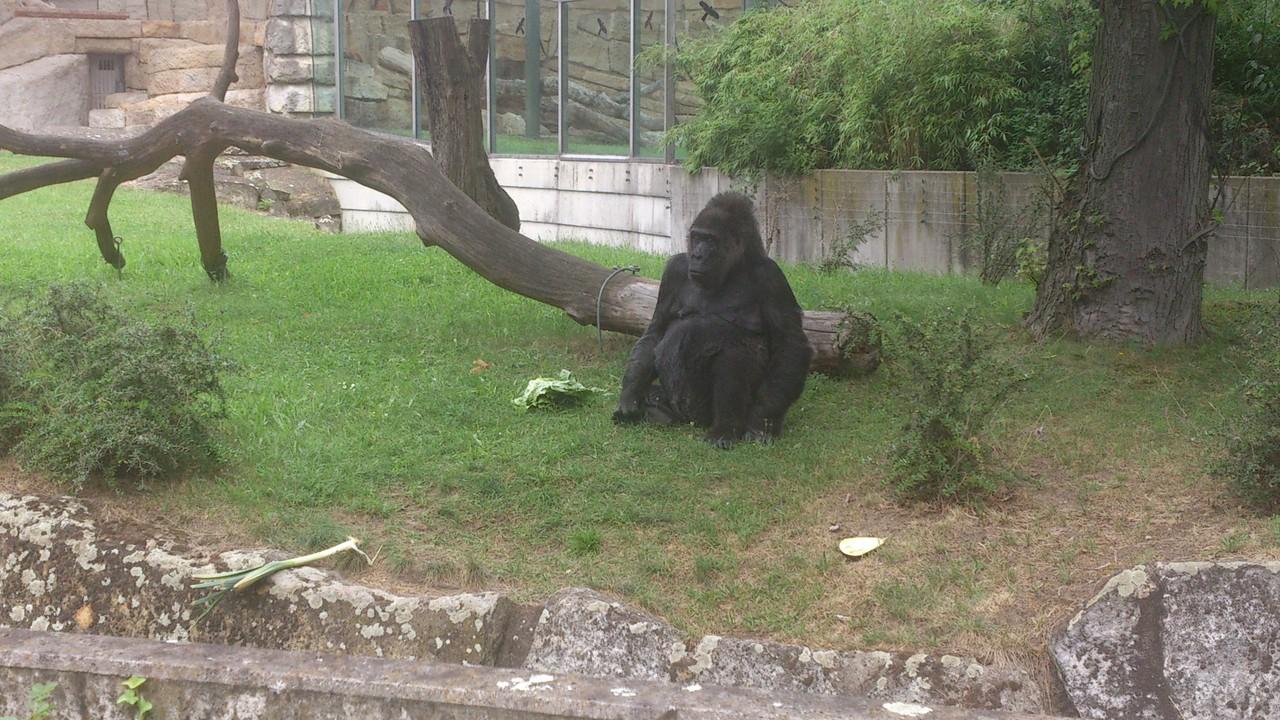 Berliner Zoo