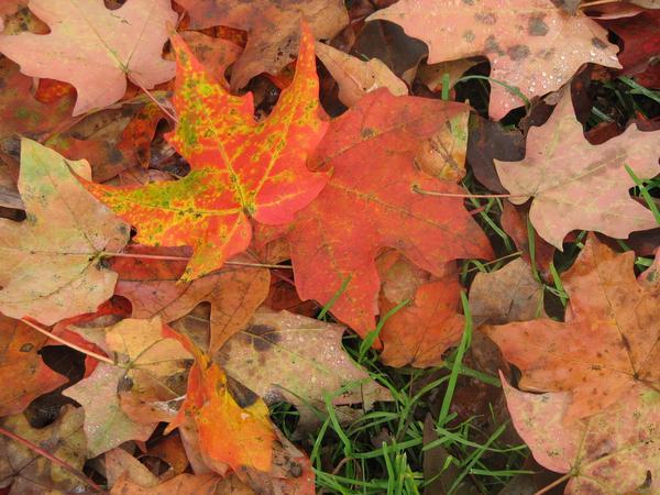 Fall Leaves - Image Source: Sweet Sugar Belle