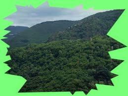 Forêts des Monts de Lacaune