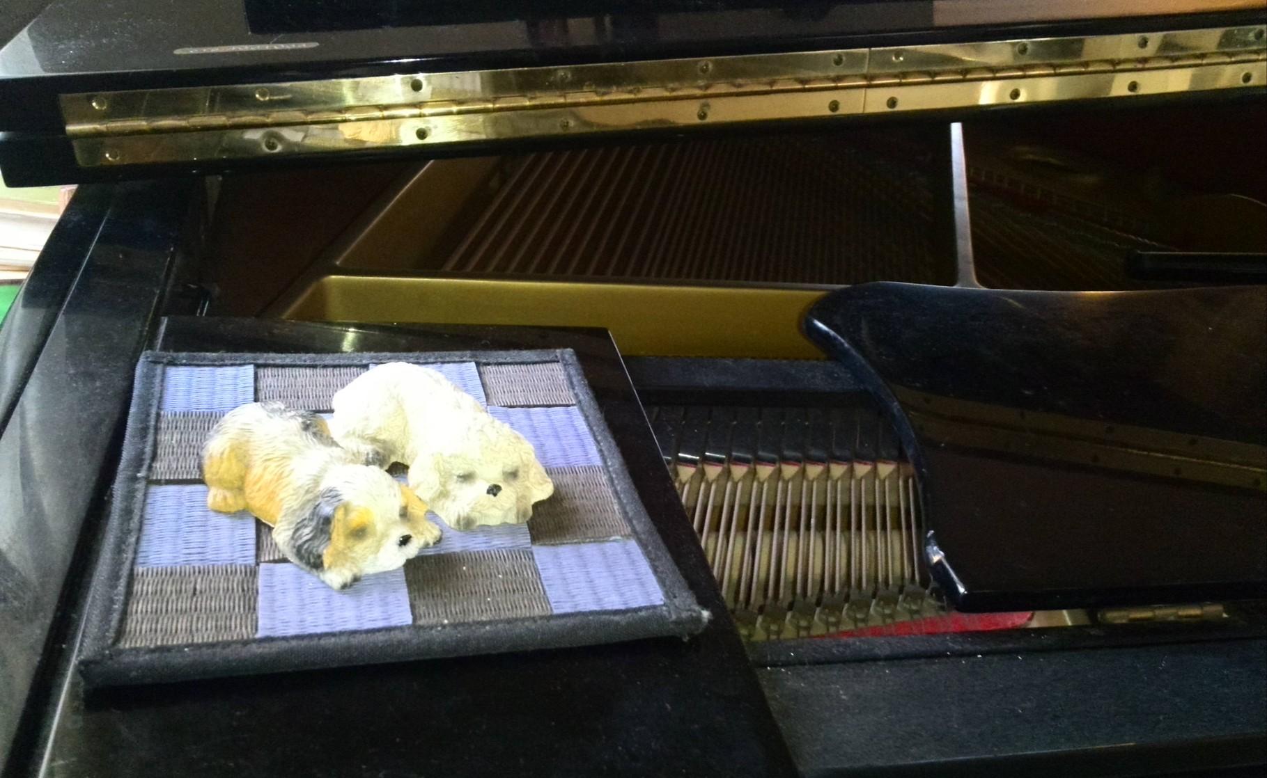 皆のピアノを聴きながら心地よく寝ているワンちゃん2匹