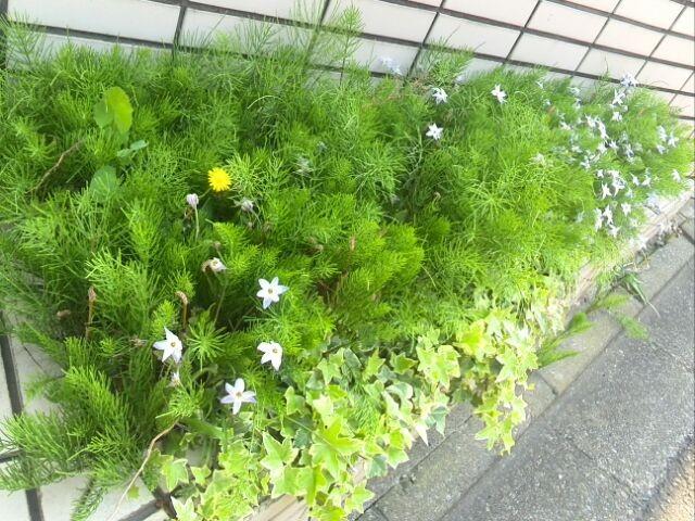 すぐに雑草でうもれてしまう門の横の花壇