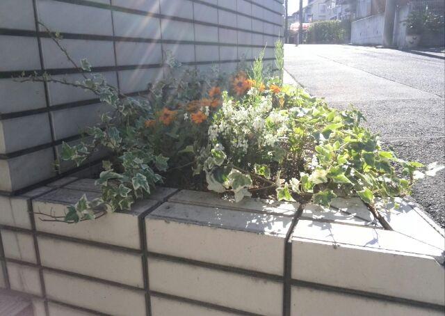 すぐに雑草だらけになってしまう門横の花壇