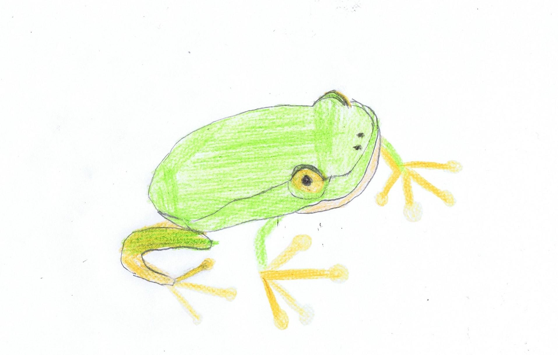 Wetterbericht vom Frosch