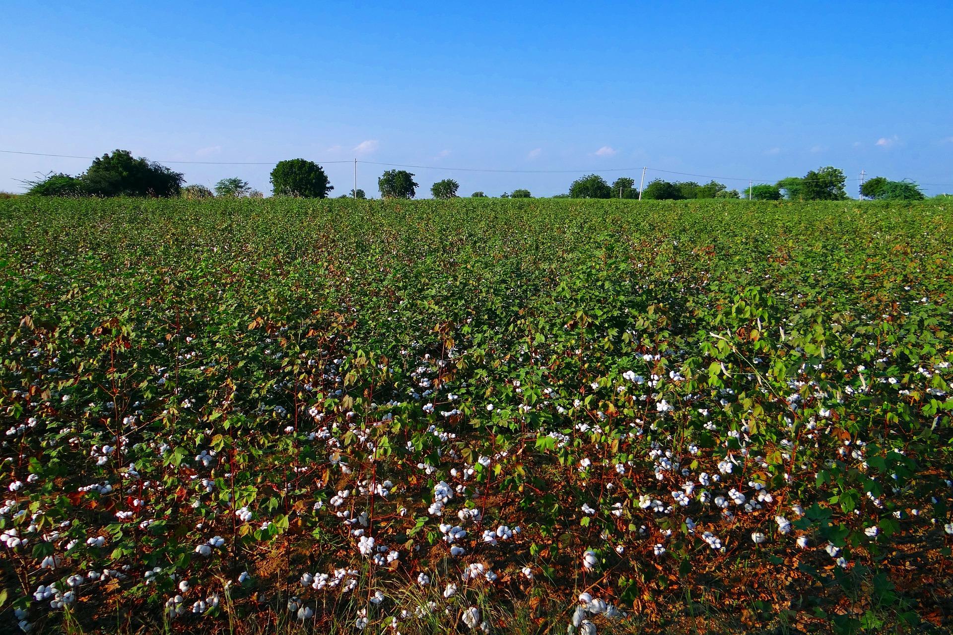 Unterwäsche aus Bio-Baumwolle, warum ist es besser Bio Wäsche zu kaufen