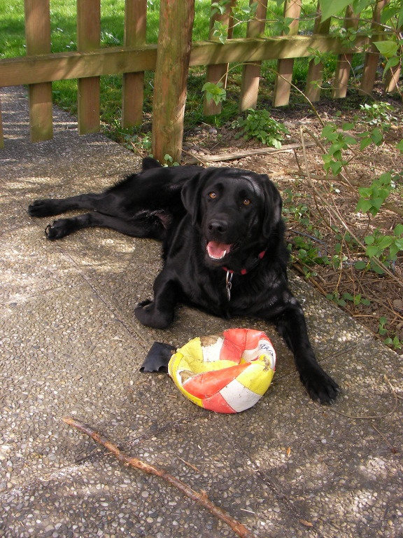 Auch mein Ball!
