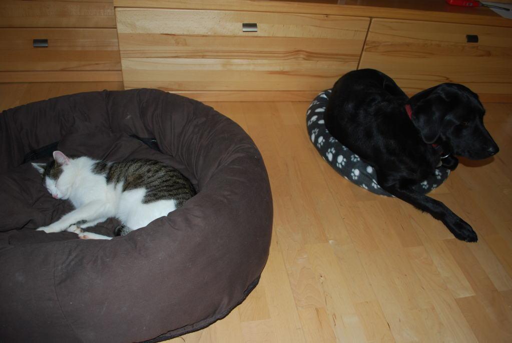 Manchmal lasse ich sogar meinen Freund Felix im Hundebett schlafen.