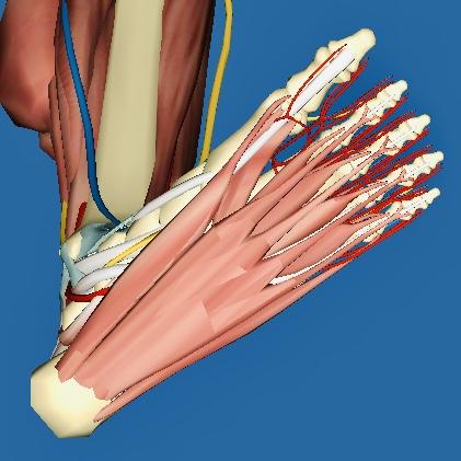 Was tun, wenn der Fuß schmerzt?