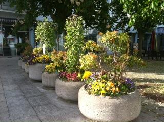 Jährlich erfreuen die bepflanzten Blumentröge die Bewohner im Stadtteil. Dank Unterstützung und Pflege durch die örtlichen Vereine in Kooperation mit den örtlichen Gärtnereien ist dies möglich. Betreuung durch Susanne Mickler.
