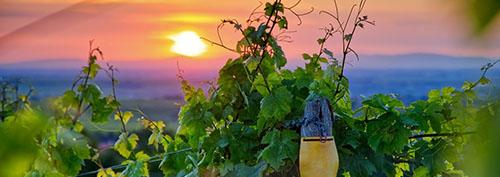 El sector vitivinícola cuida del medio ambiente a través de la innovación y sostenibilidad