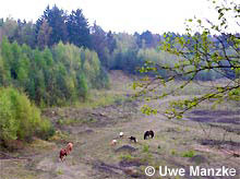 Pferde betätigen sich als Artenschützer und Landschaftspfleger.