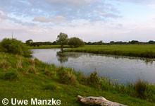 """Exkursionsziel war der Projektraum """"Naturschutz und Natur erleben in der Allerniederung bei Osterloh - Lebensraum für Rotbauchunke, Weißstorch und Feldgrille"""" in der Allerniederung bei Celle."""