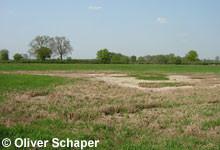In diesem Frühjahr vielerorts zu sehen, vorzeitig trockengefallene Tümpel.