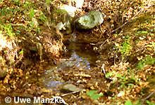 Stillwasserbereich (Kolk) eines Baches, hier findet man die Larven.