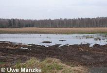 Grünlandumbruch auf Moorböden.