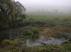 16. Oktober 2010, Regen, Nebel und Kälte am Nordberg/Reinbach Quellwiesenbiotop.